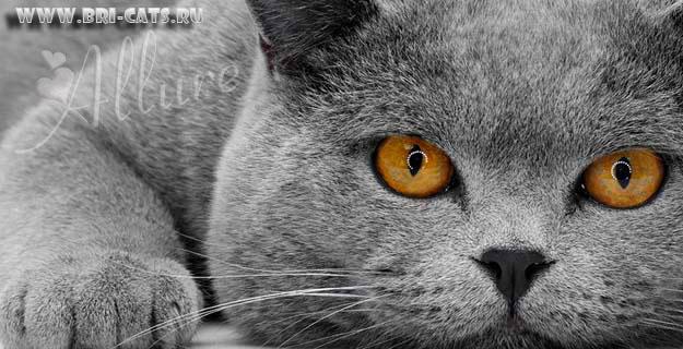 1 Марта - День кота.