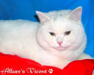 Друзья, найден белоснежный плюшевый кот с огромными