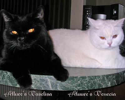 ...цвети кошка - белая или черная лишь бы она хорошо.