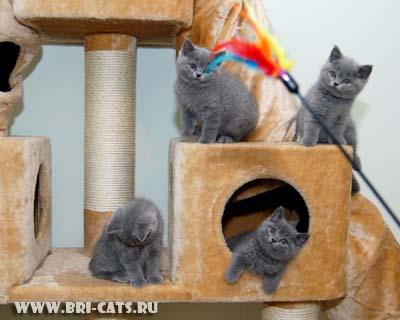 Домик для британского кота своими руками