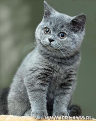 Оригинал - Схема вышивки Кошка